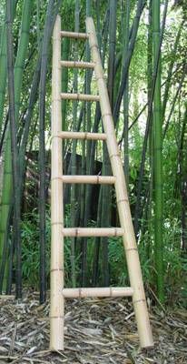 bamboo ladder and tree